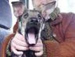 На Урале «звериного Чикатило» за убийство щенка приговорили к штрафу в 40 тысяч рублей
