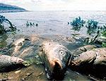 Неожиданный скандал на Урале: надзорные органы поспорили – кто виноват в массовой гибели рыбы на реке Исеть