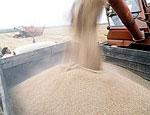 Минсельхоз РФ: Экспорт пшеницы из России приостановлен