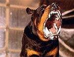 В Ужгороде из-за укуса бешеной собаки ввели карантин