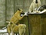 В уральском городе Сысерть нашествие бродячих собак – жителям приходится душить их голыми руками