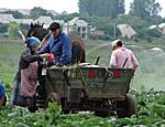Сельское население Рыбницкого района Приднестровья катастрофически сокращается