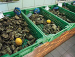На екатеринбургской таможне гибнет до 20% привезенных из Франции устриц