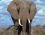 Слониха наказала наглых французских туристов