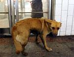 Мэрия Томска расплатилась за собачий укус