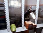 Архангельские заключенные объявили голодовку против жестоких условий содержания