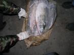 В Хабаровском крае задержали вооруженных браконьеров-наркоманов