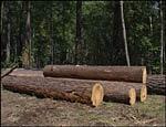 Кризис почти уничтожил уральский леспром: объем заказов упал на 85 процентов