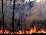 Пожар в Харьковском лесничестве удалось локализовать