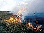 В Ровенской области продолжают тушить торфяной пожар