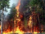 Лето 2008 года на Урале побило рекорд по количеству лесных пожаров