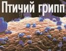 Создана новая вакцина от птичьего гриппа