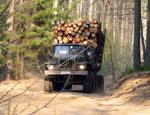 На юге Свердловской области таможенники обнаружили «лесную мафию»