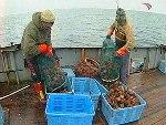 У берегов Камчатки задержано камбоджийское судно с 45 тоннами краба