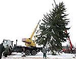 «Арестованная» рождественская елка теперь еще и пропала