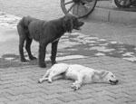 Жители Екатеринбурга выбрасывают больных животных, не в силах оплатить их лечение
