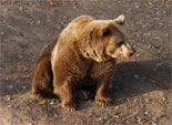 На Южном Урале определены сроки проведения «лесной переписи»