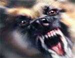 Более 120 уральцев пострадали от укусов лис, енотов, волков и бродячих собак в минувшем году