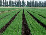 В ПМР усилят контроль над распределением кредитных средств для агросектора