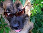 В Дубоссарском районе началась вакцинация домашних животных против бешенства