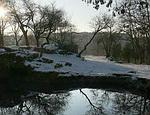 Экологи Севастополя предлагают создать на Максимке ботанический сад