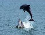 Крымские пограничники нашли на рыболовецкой шхуне мясо дельфина (ФОТО)