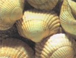 Качество воды на екатеринбургском Водоканале контролируют двустворчатые моллюски