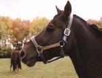 Отдыхающих в пансионатах Евпатории кормили краденой кониной