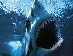 У острова Пхукет появились акулыМестные власти успокаивают туристовНовость о том, что в Таиланде, у острова Пхукет появилось почти 40 бамбуковых акул, напугала туристов...ПодробнееНР – Таиланд, 29.08.09 21:18В Казахстане аварийно сел Boeing-737