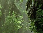 В лесах Прикамья продолжают теряться грибники