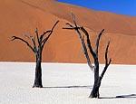 Глобальное потепление одолеют леса Сахары