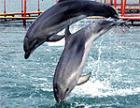 В Москве захвачен дельфинарий