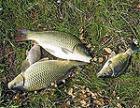 В Слободзейском районе спасают рыбу, оказавшуюся в ловушке