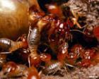 Термиты съели древнюю столицу Китая