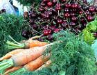 В ПМР торгующие своим урожаем крестьяне не будут платить за торговые места