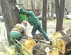 Экологи: в Севастополе проводится массовая вырубка ценных деревьев на кладбищах
