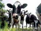 В Челябинской области будут подсчитывать энергетическую ценность кормов, заготовленных для скота