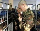 Уральцев начали вербовать в открытую Минобороны школу сержантов